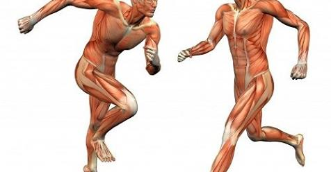 Benefits Of Muscle Power Method
