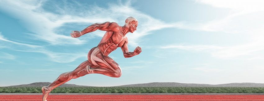 Muscle Energy Techniques - Striated Muscle
